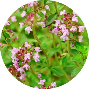 Image Thyme